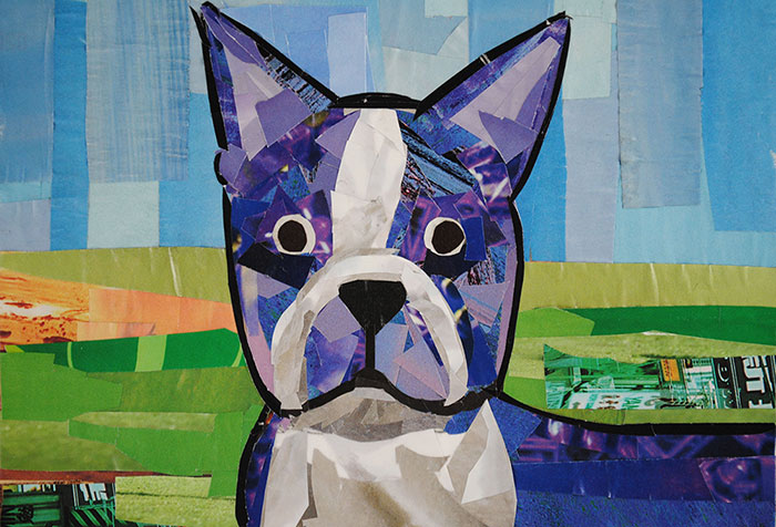 Boston Terrier by collage artist Megan Coyle
