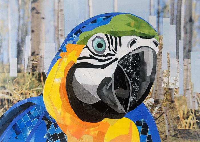 The Colorful Parrot by collage artist Megan Coyle